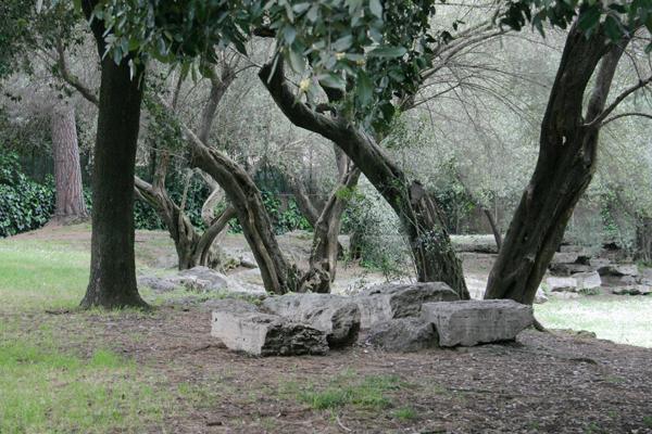 Il giardino degli ulivi u viaggi arte e cucina